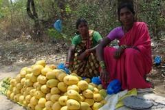 Transforming Smallholder Farms