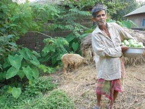 Farmer at Malda, West Bengal. Source: (Flickr): Divya Pandey, IFPRI