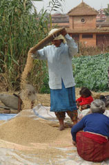Policy Research and Strategy Support for Agricultural Development and Food Security in Nepal