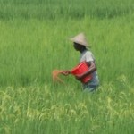 Prioritizing Agricultural Research for Development (AR4D) in South Asia- IFPRI and APAARI