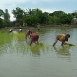 Bangladesh: Agriculture and Climate Change