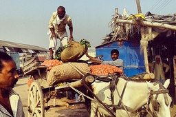 Past, Present and the Future of Agriculture in India