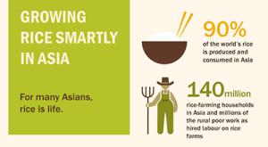 FAO-rice-strategy-thumbnail