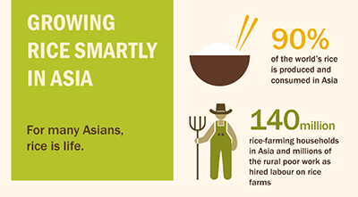 A new regional strategy calls for modernization and transformation of the rice sector in Asia