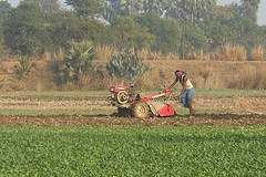 Farmer in the field at Nalanda District, Bihar. Source: (Flickr) Divya Pandey, IFPRI