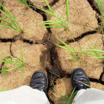 Tandem technologies and drought-risk management in Bangladesh