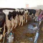Financing of Dairy Value Chains in India