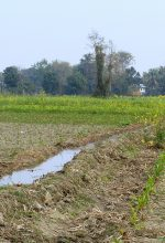 Growing Fertilizer Market in Nepal