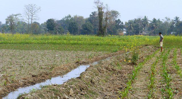 Growing Fertilizer Market in Nepal