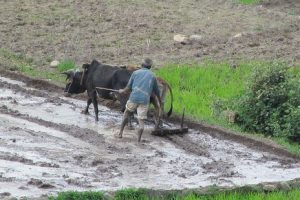 land reforms – IFPRI South Asia Office